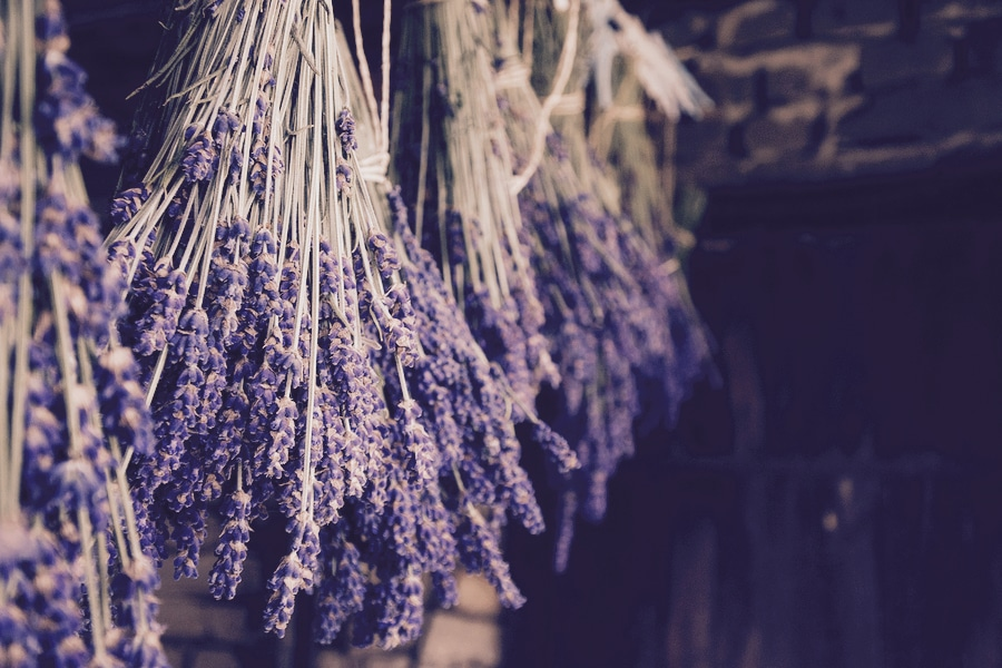 bigstock-Dried-lavender-hanging-beauti-191926978_CFP